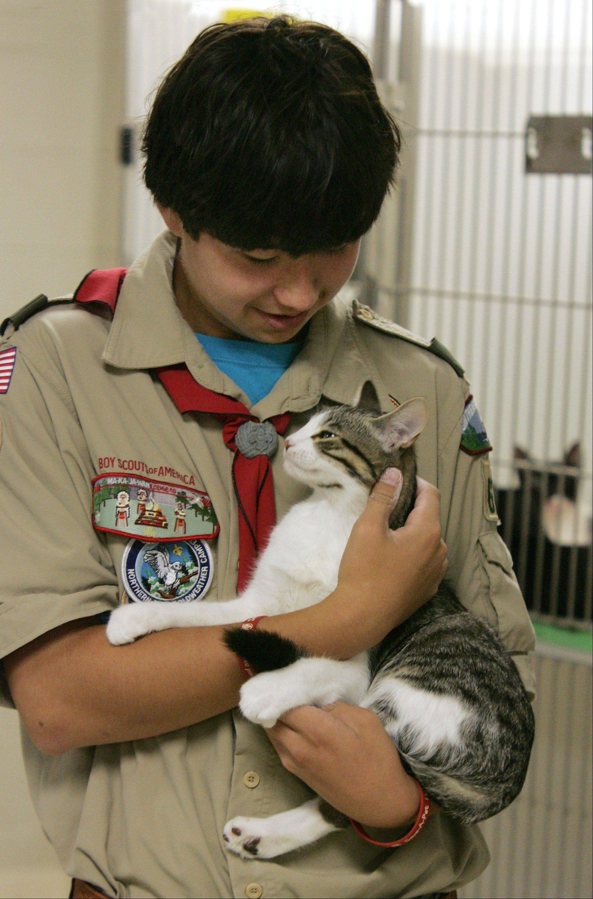 Scott Seiler, of Boy Scout Troop 671, holds Patriot, a domestic short hair cat, at Save-A-Pet Adoption Center in Grayslake Sunday. Seiler organized a face lift for the kitten room by scouts and leaders as part of an eagle project.