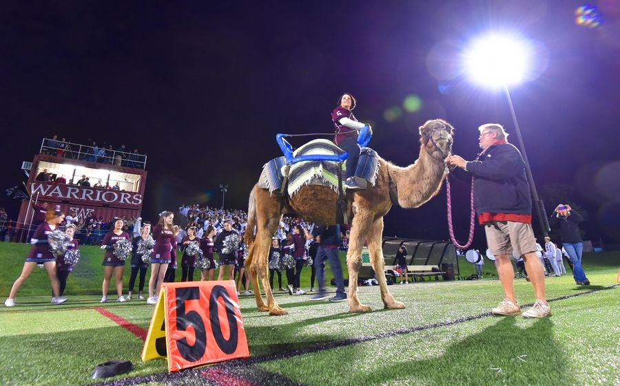 Wheaton Academy principal Kori Hockett sits on a camel at the fifty yard line before a football game against Bishop McNamara in West Chicago Thursday. It was part of Homecoming week activities.